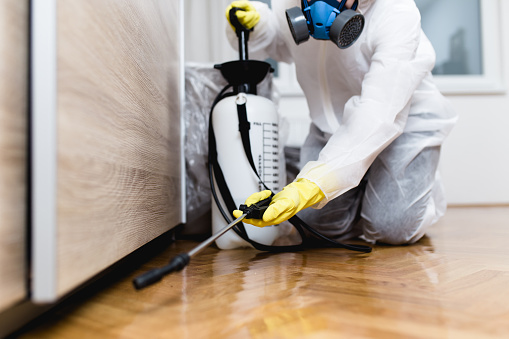 Woman exterminator in work wear spraying pesticide or insecticide with sprayer