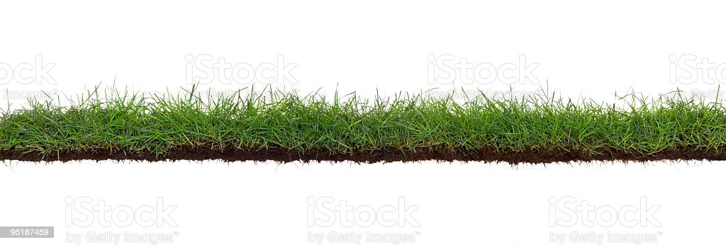 Extra large grass and roots isolated stock photo