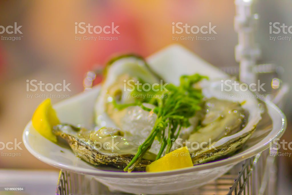 Extra large size of oysters served on ice with young lead tree leaves...