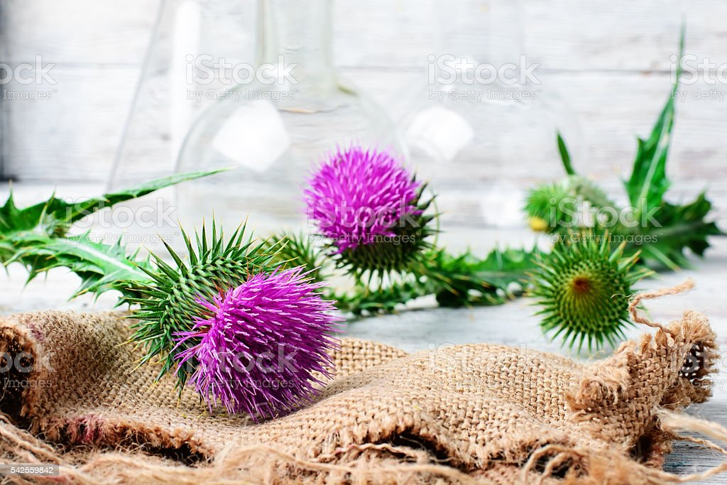 Extract from medicinal plants stock photo