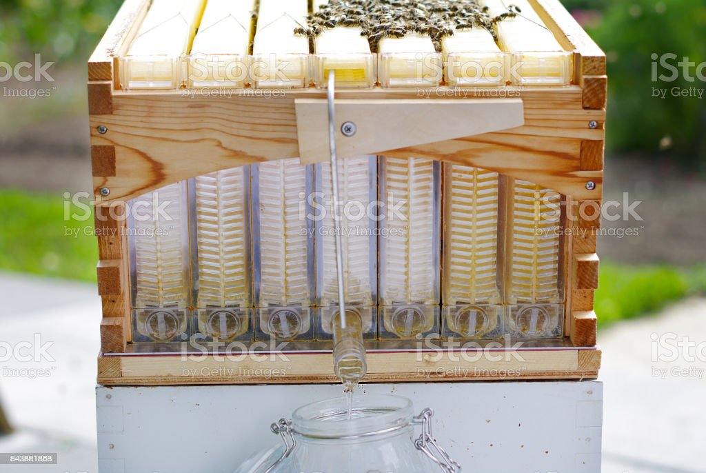 Extracting natural honey stock photo