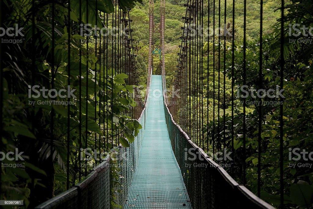 Extraordinary hanging bridge in between miles of trees  stock photo