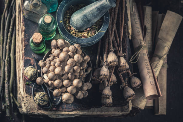 Extraordinary herbalist laboratory with ingredients and herbs stock photo