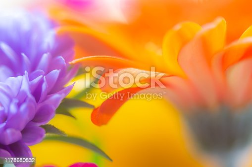 Extreme close up, macro flower, purple orange and yellow macrophotography abstract floral
