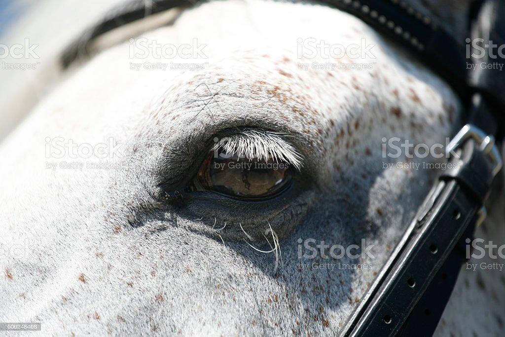 Extreme close up of a beautiful grey horse eyes stock photo