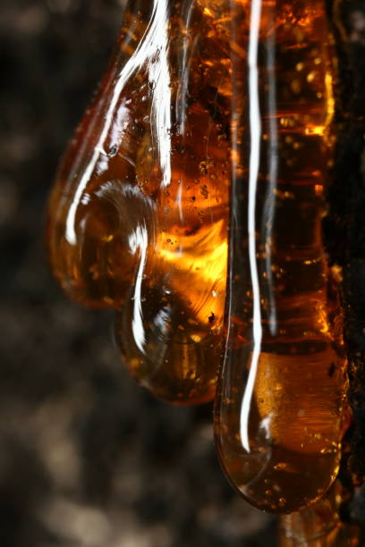 Extreme close up of amber tree, selective focus and free space for text. Low key effect image. Natural and science concept. Extreme close up of amber tree, selective focus and free space for text. Low key effect image. Natural and science concept. fossilized pitch stock pictures, royalty-free photos & images