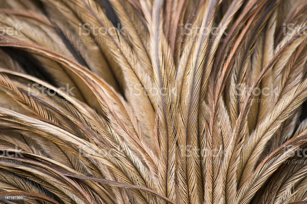 Extreme close up of feathers on an Emu's back stock photo