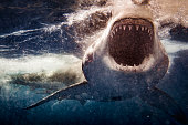 istock Extreme close up of Great White Shark attack with blood 1301668323