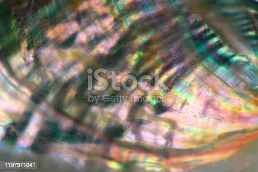 istock Extreme close-up of Abalone shell 1197971041