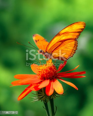 Macro photo showing eye, antennae and legs of butterfly feeding on flower nectar