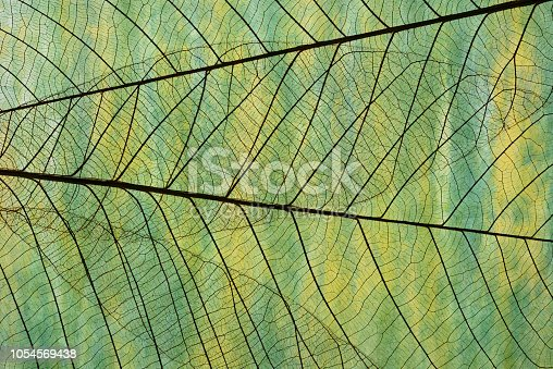 Extreme close-up of leaf vein skeleton against abstract Washi paper.