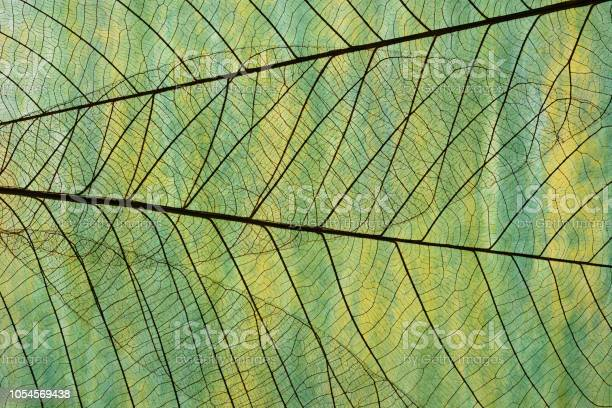 Photo of Extreme close-up of leaf vein skeleton against Washi paper.