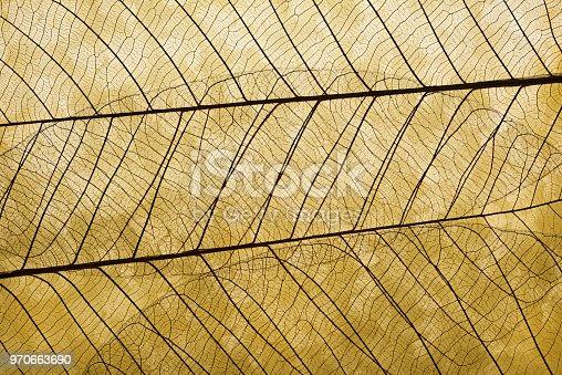 Extreme close-up of leaf vein skeleton on gold leaf.