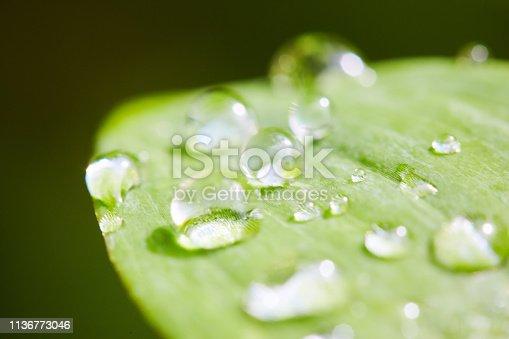 Macro shot of rain or dew drops on a fresh green leaf.