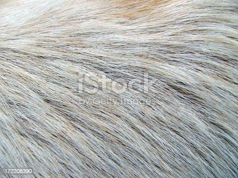 Closeup of white fur.