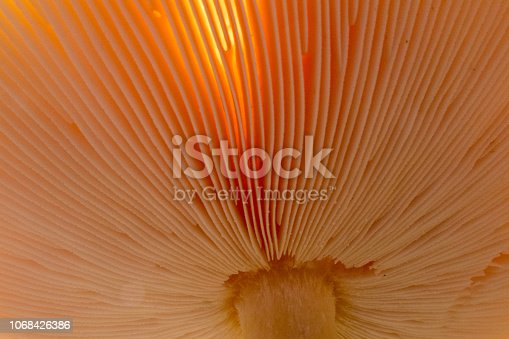 Extreme close-up of the hood of a mushroom