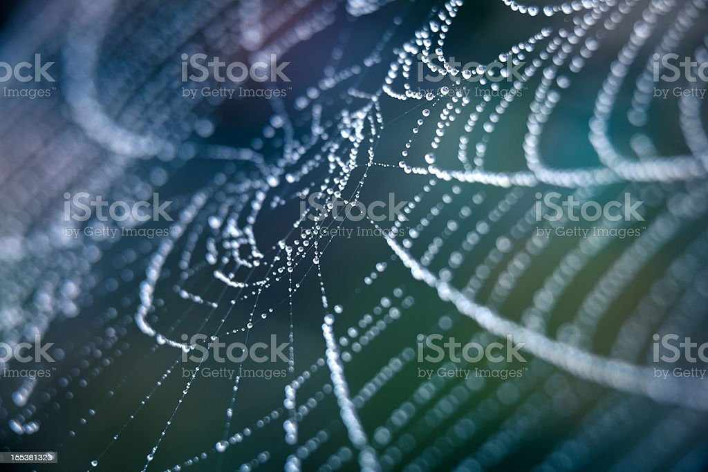 Extreme Closeup Spiderweb With Dew stock photo