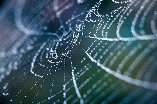 extreme closeup spiderweb with dew - spider web stock photos and pictures