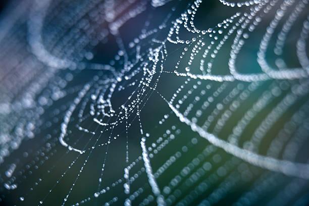 Extreme Closeup Spiderweb With Dew stock photo