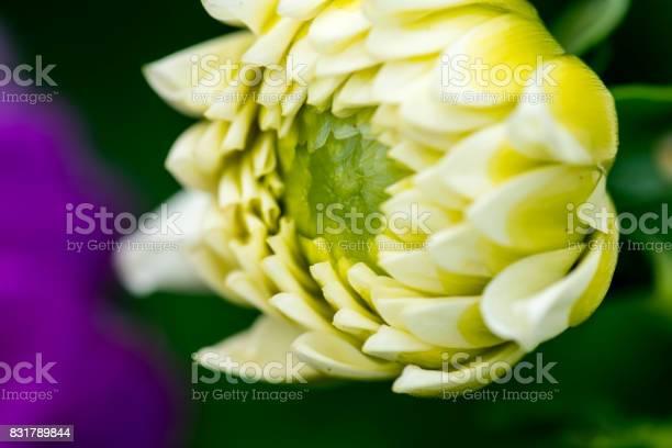 Extreme macro of a colorful flower picture id831789844?b=1&k=6&m=831789844&s=612x612&h=npjgl4ojer3nmfaz0wrvylvtvttwxpbasjefnj8cljq=