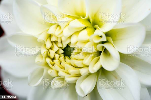Extreme macro of a colorful flower picture id831790072?b=1&k=6&m=831790072&s=612x612&h=iwdlkammvsfqgqocxw7bqxi3mi7zcv3ooklvxjrgc3c=