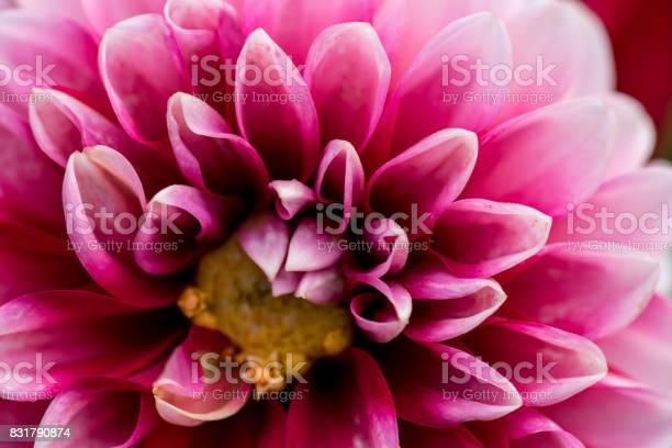 Extreme macro of a colorful flower picture id831790874?b=1&k=6&m=831790874&s=612x612&h=rmctkl2ywdycqobbfu4t5jksk607u4mf3jqmfn3nefq=