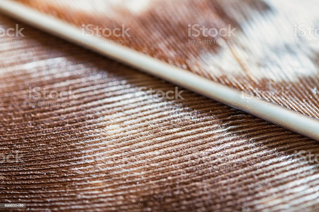 Extreme macro of beautiful brown bird of prey feather texture background stock photo