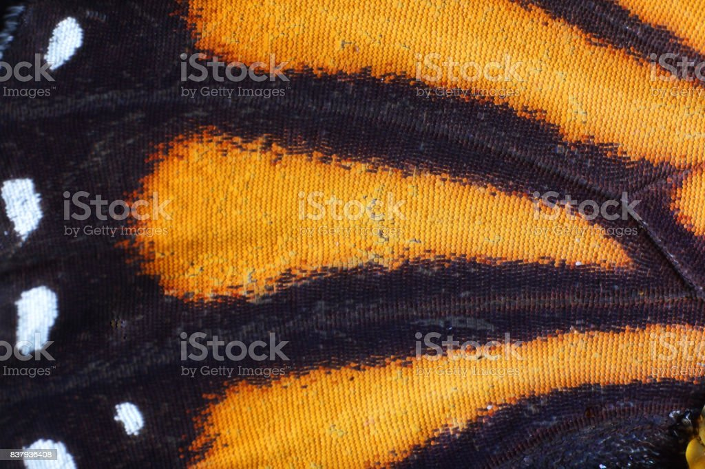 extreme macro of butterfly wing texture stock photo
