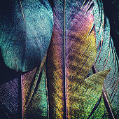 Photography of colorful bird feather animal wing close-up, extreme macro of several beautiful feather texture and reflection rainbow multi colors, with vibrant color spectrum light (blue, cyan, green, yellow, red, magenta etc...).