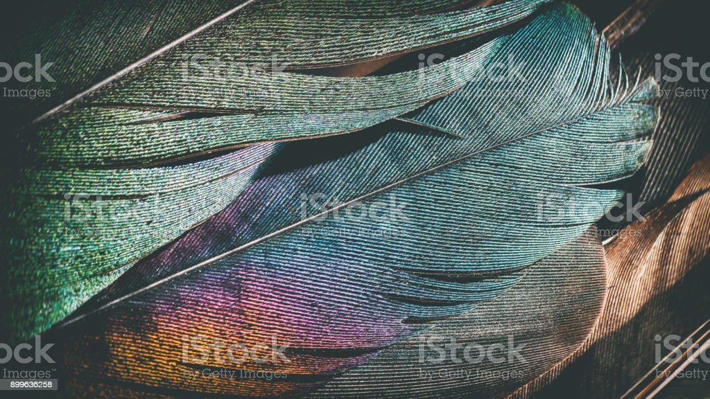 Extreme macro of several beautiful bird feather texture and reflection multi colors light stock photo