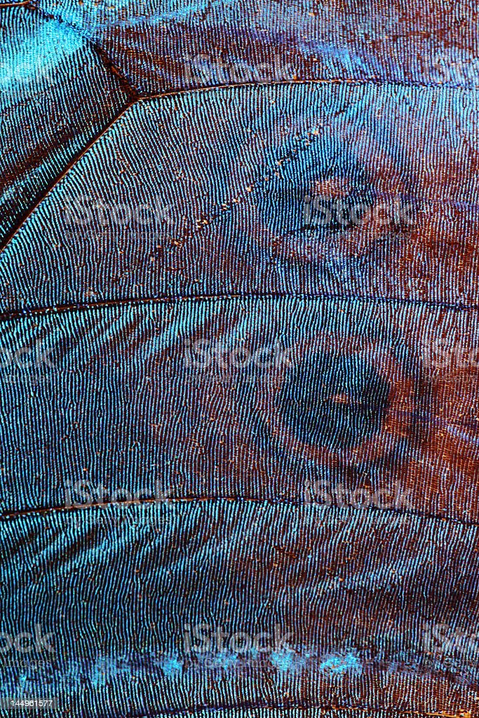 Extreme macrophoto of a blue butterfly wing stock photo