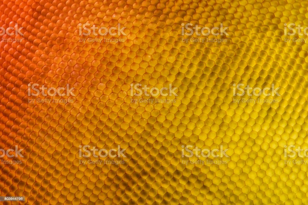 Extreme magnification - Butterfly eye under the microscope stock photo
