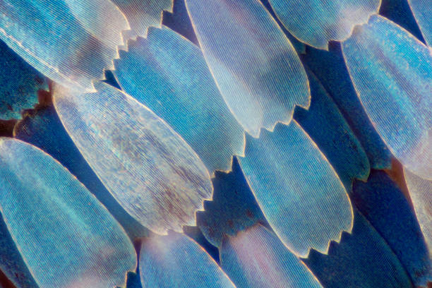 extreme magnification - butterfly wing under the microscope - ingrandimento foto e immagini stock