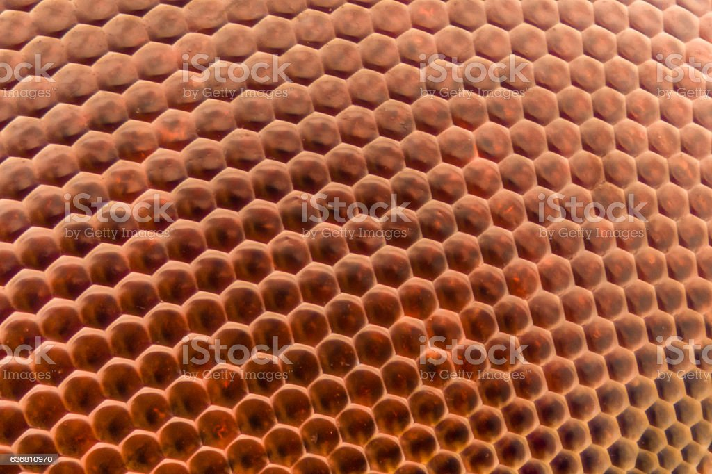 Extreme magnification - Dragonfly compound eye texture at 20x stock photo