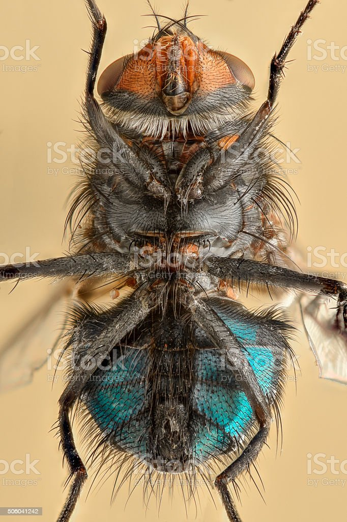 Extreme Magnification Fly Body From Underneath Stock Photo & More ...