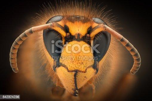 972704120istockphoto Extreme magnification - Giant Wasp 542324236