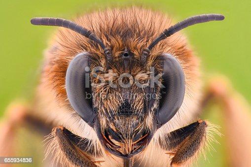 istock Extreme magnification - Honey Bee 655934836