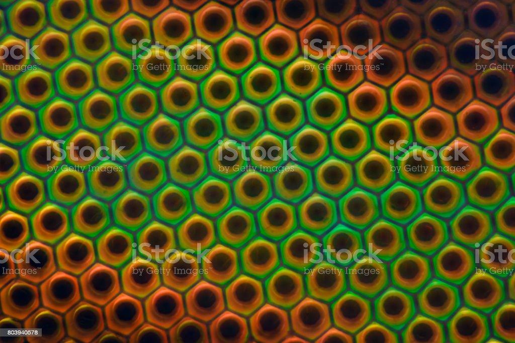 Extreme vergrößerung pferdefliege facettenauge unter dem mikroskop