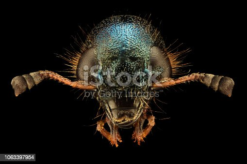 istock Extreme magnification - Jewel Beetle 1063397954