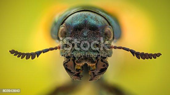 istock Extreme magnification - Jewel Beetle 803943640