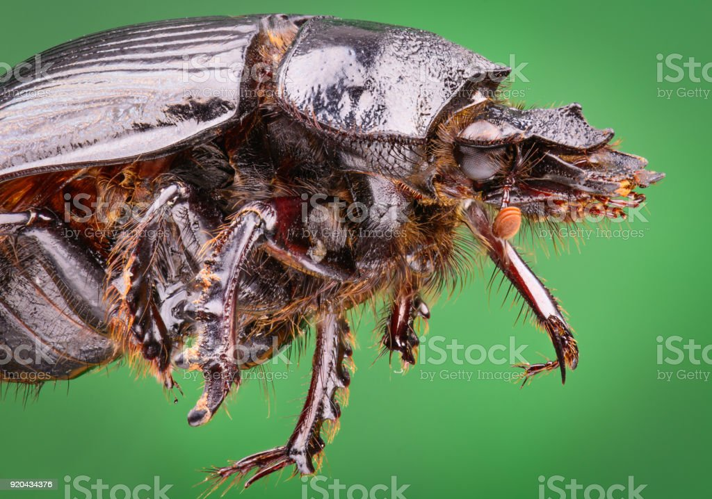extreme magnification macro close up of beetle. high resolution details stock photo