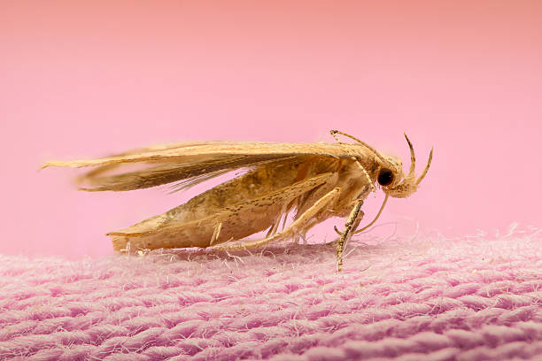 Extreme magnification moth on cloth picture id502965982?b=1&k=6&m=502965982&s=612x612&w=0&h=ah  u4gvutey3w3pek2biw6 eztaikkwxnlcrwopnd8=