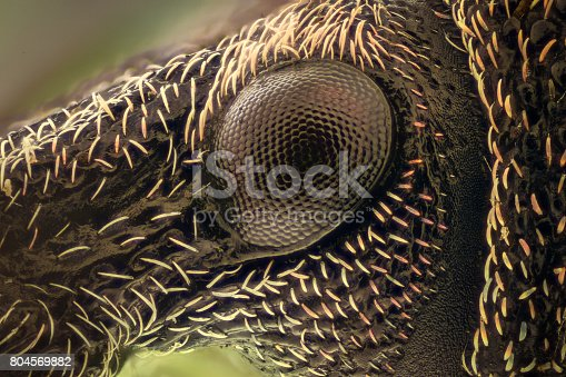 istock Extreme magnification - Weevil 804569882