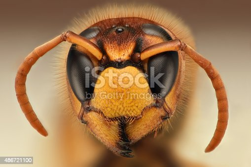 972704120istockphoto Extreme sharp closeup of wasp head 486721100