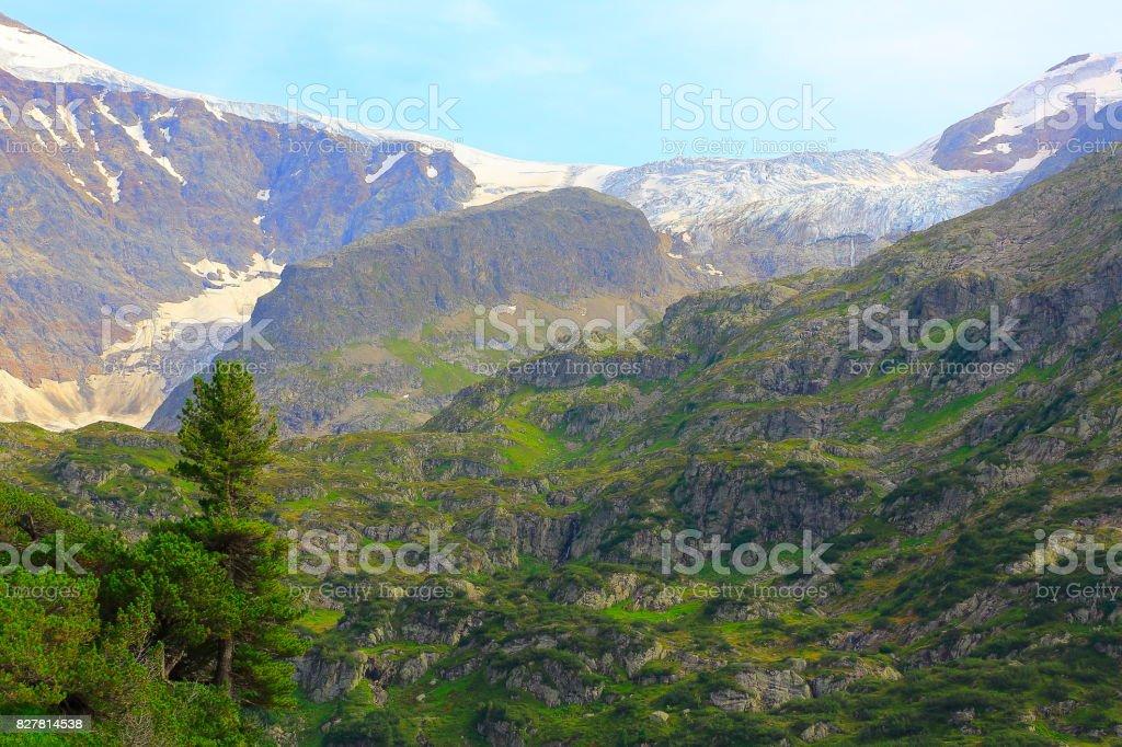 Susten Pass, idyllic glacier and pine tree green woodland valley,...