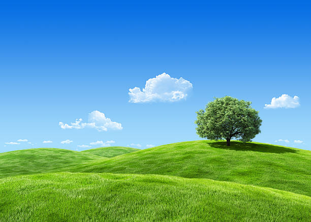 Extremely detailed 7000px 3d render with tree on lea stock photo