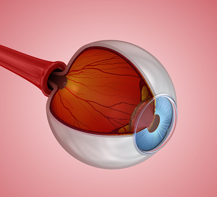 Ögats Anatomi Inre Struktur 3d Illustration-foton och fler bilder på Anatomi