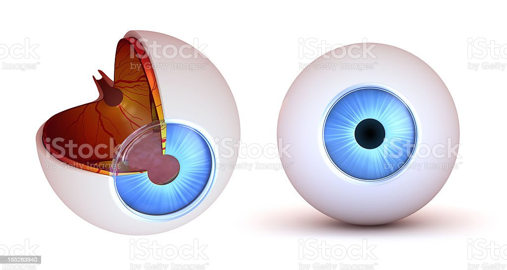 Eye anatomy - inner structure and front view stock photo