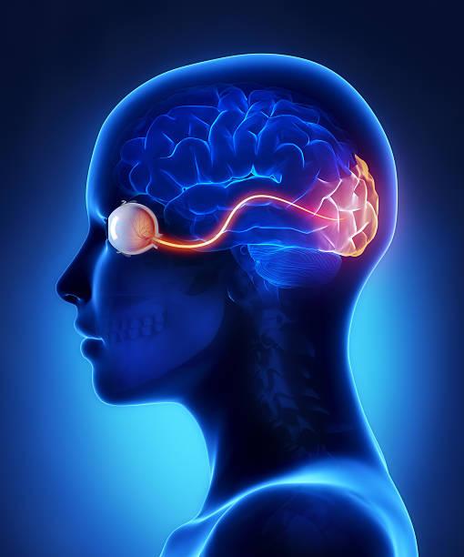 Eye und Sehrinde Nerven – Foto