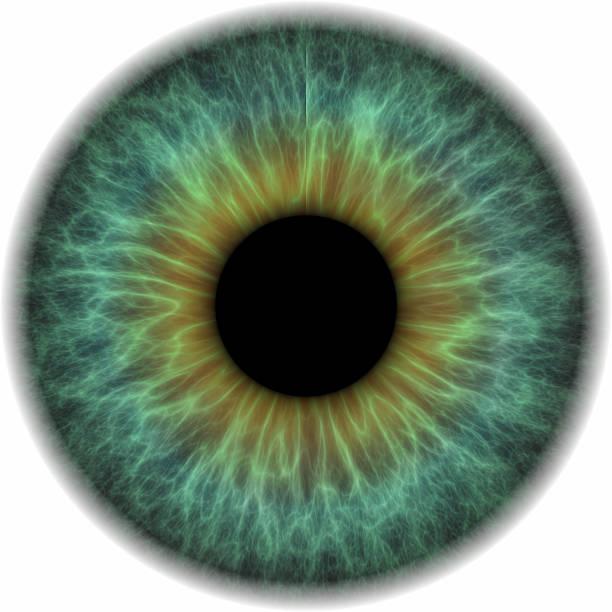Eye ball, isoliert auf weißem Hintergrund – Foto